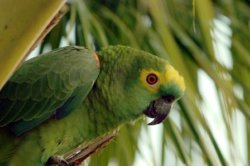 Amazon Rainforest Parrot
