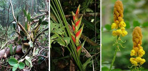 Tropical Rainforest Plants Amazon Rainforest Plants